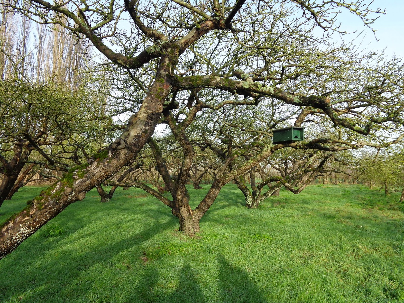 van alles wat un peu de tout praktijkles fruitbomen snoeien tailler les arbres fruitier dans. Black Bedroom Furniture Sets. Home Design Ideas