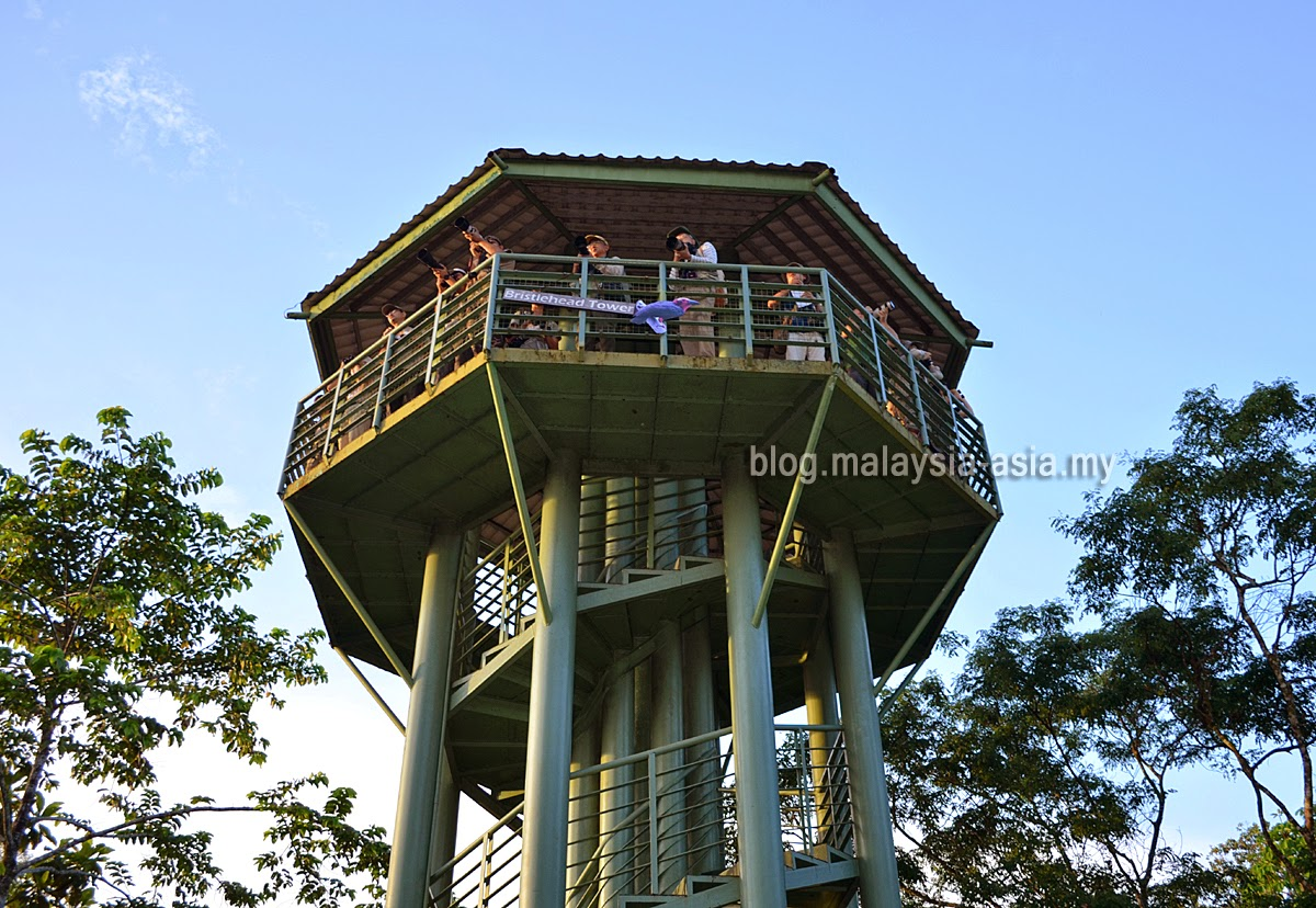 Bird Watching at the RDC in Sandakan, Sabah