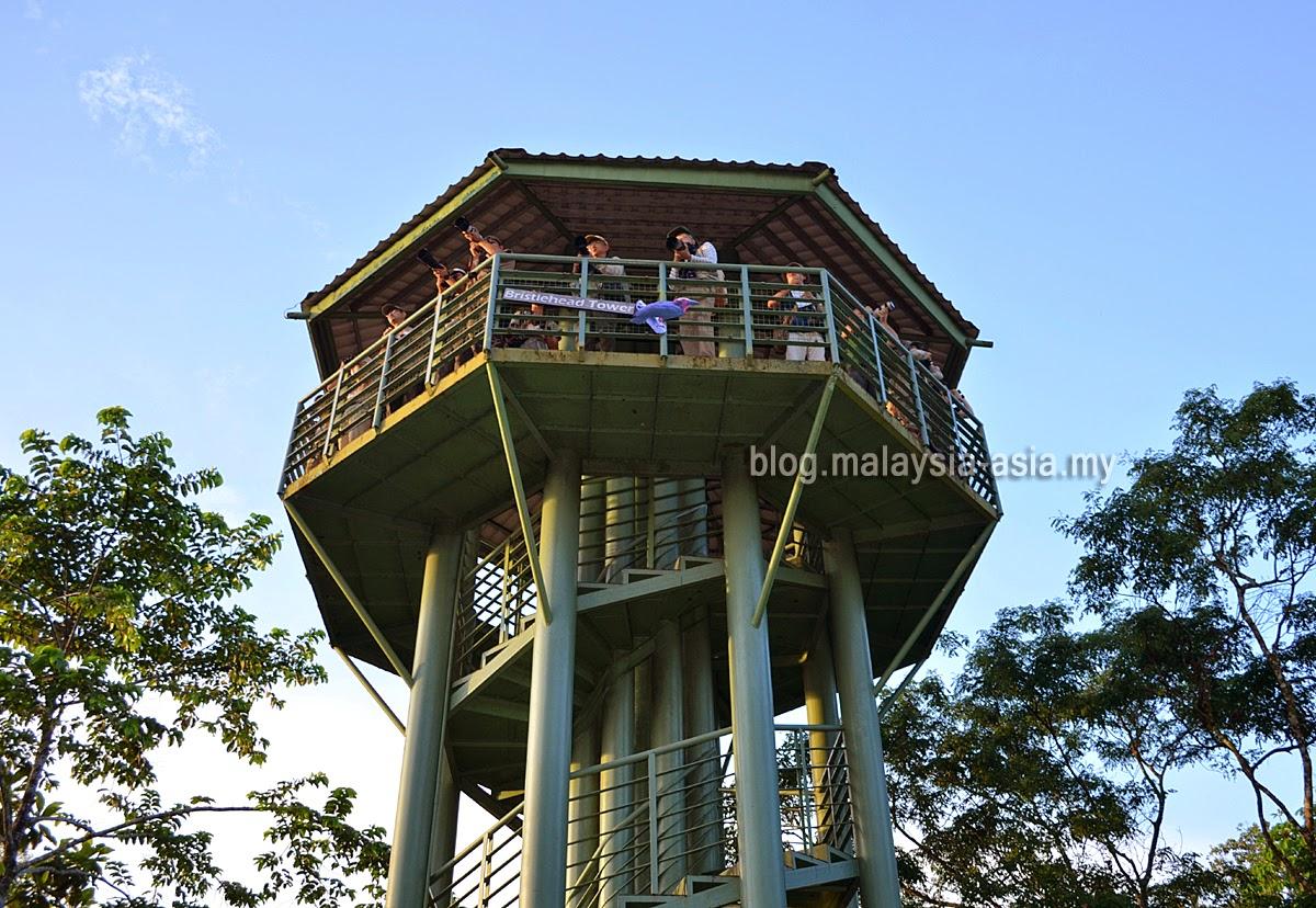 Bird Watching at the RDC in Sandakan, Sabah