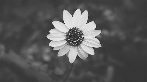 Flor de aço!