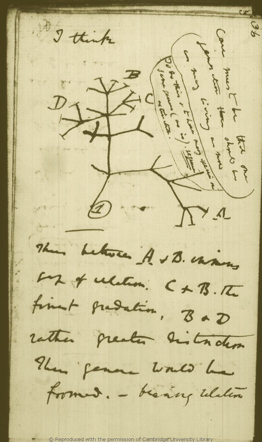 Tree of life (biology)