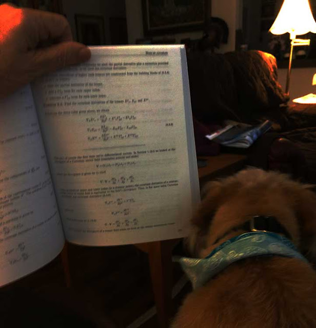 Astronomer Assistant Ruby pretends to read along in the general relativity text (Source: Palmia Observatory