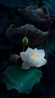 Rác và Hoa: nếu không có khổ đau thì không có hạnh phúc.