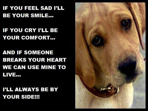 Dog Quotes: Funny Pictures Gallery: Dog Sayings, Dog Sayings And Phrases