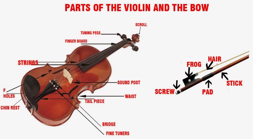 Partsof the Violin