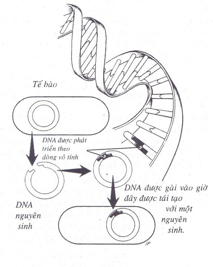Liệu pháp gien là gì?