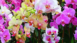 cara membuat bunga plastik hiasan ruang tamu, jenis bunga dalam ruangan, tanaman dalam ruangan untuk kesehatan dan pengusir nyamuk, tanaman hias dalam ruangan ac, tanaman hias mini dalam ruangan,