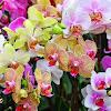 Memanfaatkan Aneka Bunga Hidup Hiasan Dalam Rumah