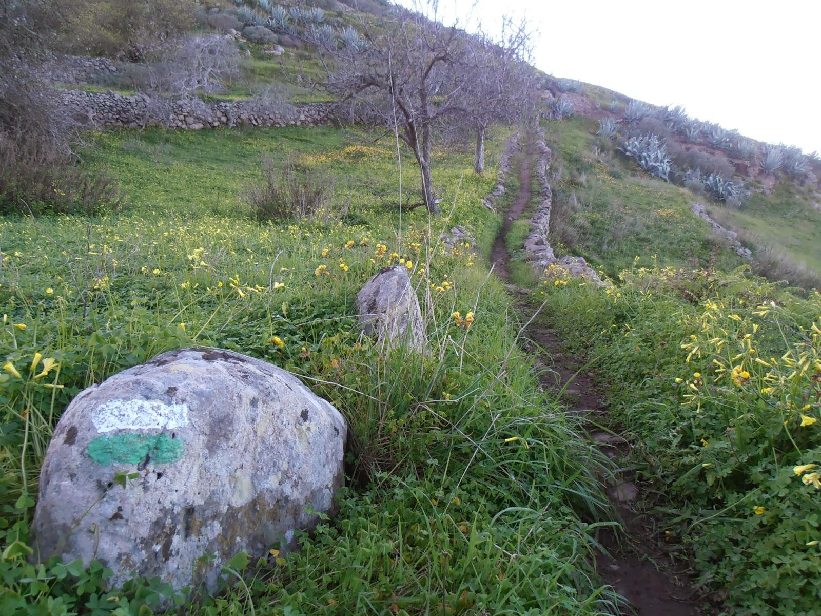 Camino con marcas de sendero local