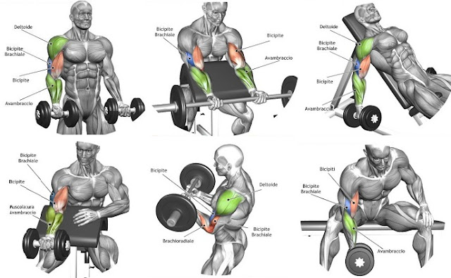 The Best Bicep Workout Program to Ensure the Biggest