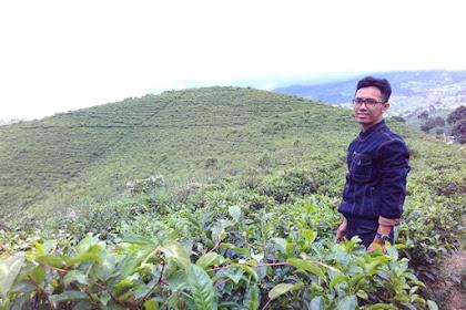jalan-jalan ke kebun teh kemuning karanganyar, menikmati hijaunya kebun teh di kaki gunung lawu