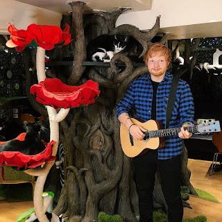 Melihat Patung Lilin Unik Ed Sheeran Di Kelilingi Kucing