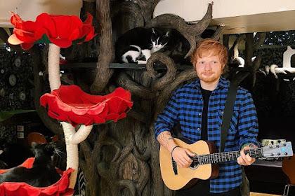 Melihat Patung Lilin Unik Ed Sheeran Di Kelilingi Kucing Dan Kabar Terbaru Konsernya Di Jakarta