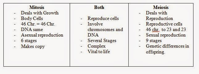 Mitosis Vs Meiosis Venn Diagram Answers – Comparing Mitosis and Meiosis Worksheet Answers