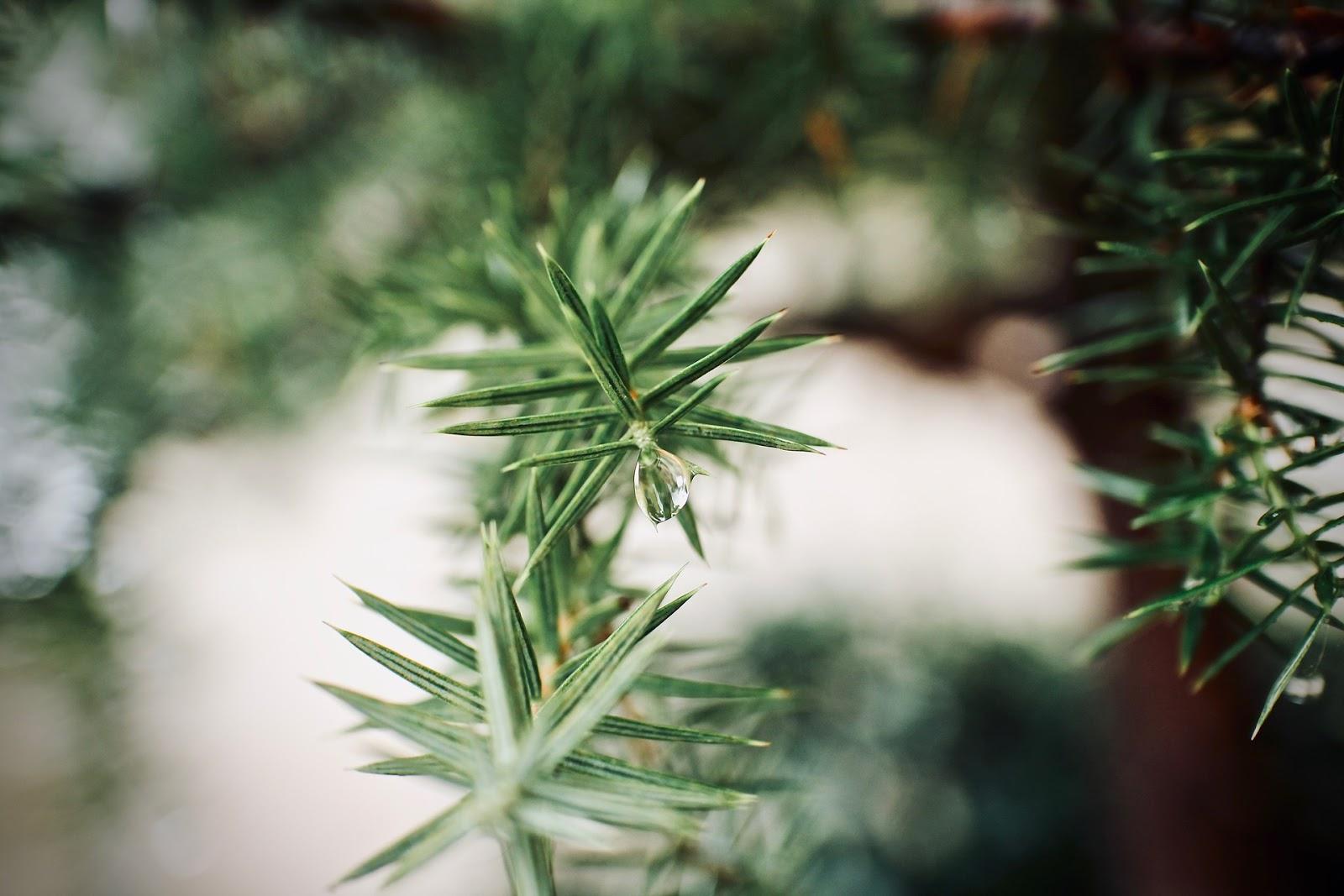Weihnachtsbaum Echt Oder Künstlich.Künstlicher Weihnachtsbaum Der Wie Echt Aussieht Im Test