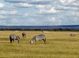 Ekosistem Darat Pengertian, Ciri-Ciri dan Contohnya