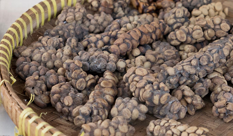 3ec01332c957 Η διαδικασία πέψης της μοσχογαλής luwak και τα γαστρικά υγρά της επιδρούν  στους κόκκους του καφέ αυξάνοντας τα επίπεδα κιτρικού και μηλικού οξέως ...