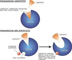 Protein : Pengertian, Fungsi, Metabolisme, Jenis