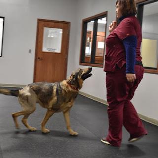 Greatmats rubber flooring for dogs Babinski Foundation