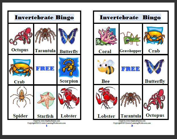 Learning Ideas Grades K 8 Invertebrates Video And Resources