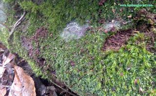apa itu sphagnum moss
