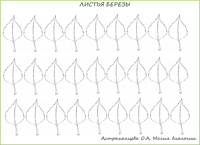 шаблон-листья-березы