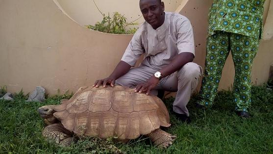 soun of ogbomoso tortoise