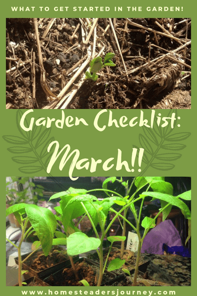 Garden Checklist for March! This is a very exciting month and  I really start getting everything going! Flowers are blooming, peas are sprouting and the spring rains have arrived! #homesteader #gardenchecklist
