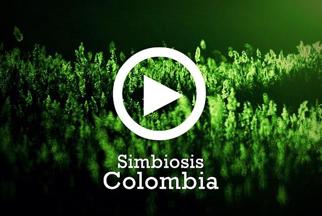 SIMBIOSIS COLOMBIA, una playlist en Spotify con increíbles bandas colombianas, una convergencia de sonidos colombianos alternativos.