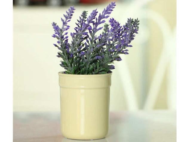 Bunga lavender yaitu bunga yang mempunyai ciri khas yakni mempunyai bunga berwarna ungu CARA MENANAM DAN MERAWAT BUNGA LAVENDER