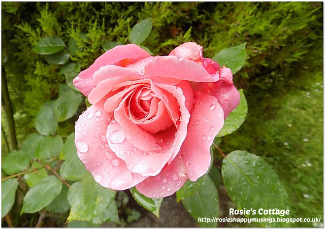 The Picture Perfect Project July Raindrops on Rose Petals