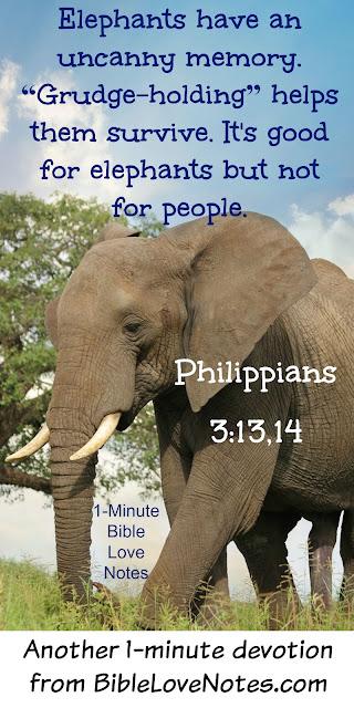 Elephants have uncanny memories, Elephants holds grudges, People shouldn't hold grudges, Philippians 3:13-14