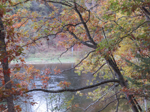 Muskegon River with autumn oaks