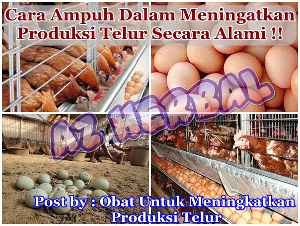 Obat Untuk Meningkatkan Produksi Telur