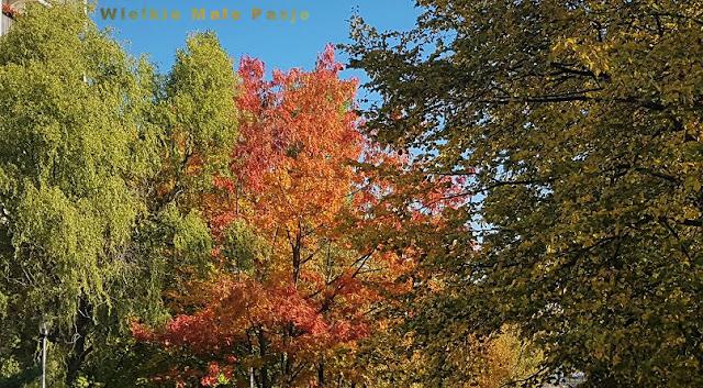 jesień, polska jesień, złota jesień, kolorowe drzewa, jesienne drzewa, jesienny las, las jesienią, skarpetkowe lalki, lalki uszyte ze skarpetki, lalki tekstylne, jak uszyć lalkę, zabawki ze skarpetki, aniołki ręcznie szyte, pamiątka chrztu świętego, lalki dla małych dzieci, noisidełko dla lalki, prace ze skarpetki. lalki ręcznie szyte, skarpetkowa lalka ,Outono, outono polonês, outono dourado, árvores coloridas, árvores de outono, floresta de outono, bonecas de meia, bonecos costurados de meias, bonecas têxteis, como costurar uma boneca, brinquedos de meias, anjos costurados à mão, lembrança de batismo, bonecos para pequenos crianças, noisidełko para uma boneca, trabalhar com meias. bonecos feitos à mão costurados, boneca de meia, Осень, польская осень, золотая осень, разноцветные деревья, осенние деревья, осенний лес, куклы-носки, куклы, сшитые из носков, текстильные куклы, как сшить куклу, игрушки для носков, сшитые вручную ангелы, сувениры для крещения, куклы для маленьких дети, noisidełko для куклы, работа с носками. куклы ручной работы сшитые, носовая кукла, Autumn, Polish autumn, golden autumn, colorful trees, autumn trees, autumn forest, sock dolls, dolls sewn from socks, textile dolls, how to sew a doll, socks toys, hand-sewn angels, baptism souvenir, dolls for small children, noisidełko for a doll, work with socks. handmade dolls sewn, sock doll, Herbst, polnischer Herbst, goldener Herbst, bunte Bäume, Herbstbäume, Herbstwald, Socke Puppen, Puppen aus Socken genäht, Textilpuppen, wie man eine Puppe näht, Socken Spielzeug, handgenähte Engel, Taufe Souvenir, Puppen für kleine Kinder, noisidełko für eine Puppe, arbeiten mit Socken. handgemachte Puppen genäht, Sockenpuppe, Otoño, otoño polaco, otoño dorado, árboles coloridos, árboles otoñales, bosque de otoño, muñecos de calcetines, muñecas cosidas de calcetines, muñecas textiles, cómo coser una muñeca, juguetes de calcetines, ángeles cosidos a mano, recuerdos de bautismo, muñecas para niños Niños, noisidełko p