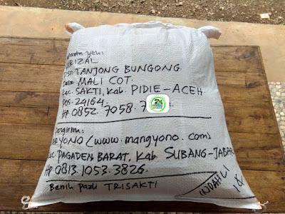 Benih pesanan YULIZAL Pidie, Aceh..   (Sesudah Packing)