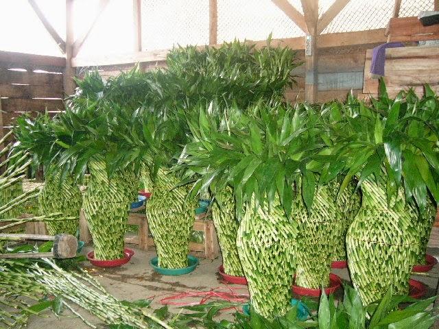 bambu-rejeki