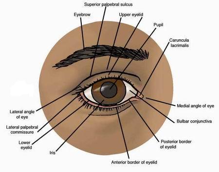 Eye Diseases Chart