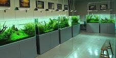 Alat dan Bahan Lengkap Untuk Membuat Aquascape