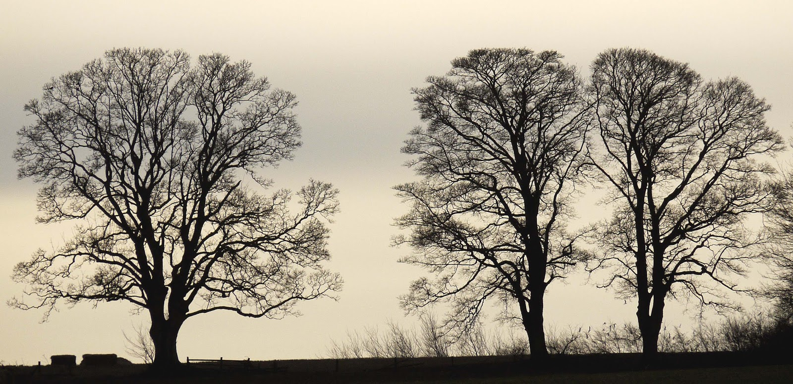 Cabinet of curiosities tree silhouettes in winter - Autumn plowing time all set for winter ...