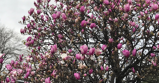 God Speaks Life Through A Tulip Tree
