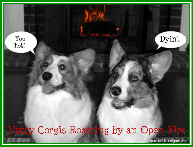 two corgis in front of a lit fireplace