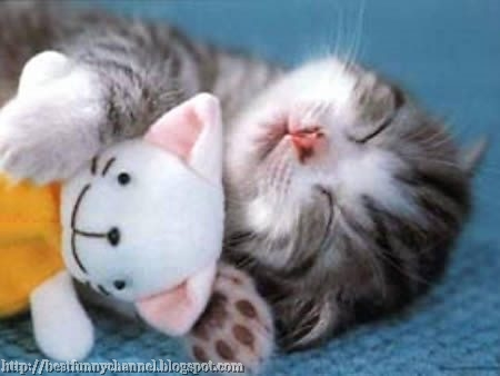 Kitty sleeping with toy
