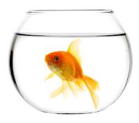 problema pesce rosso