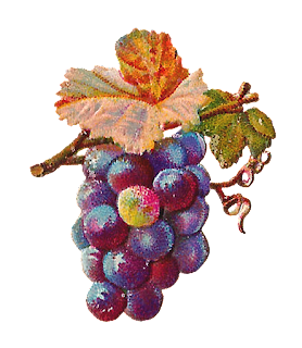 grape fruit image digital