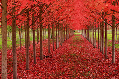 خلفيات طبيعية ساحره ورود حمراء