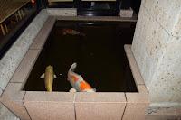 Pływające ryby obok restauracji