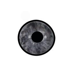 silver eye Invite #AtoZchallenge #ShortStory #AdForRoomatesStory #Paranormal #UrbanFantasy