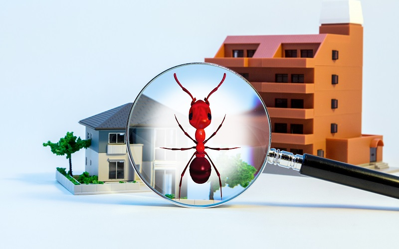 Get The Termite Control Treatment To Save The Infrastructure