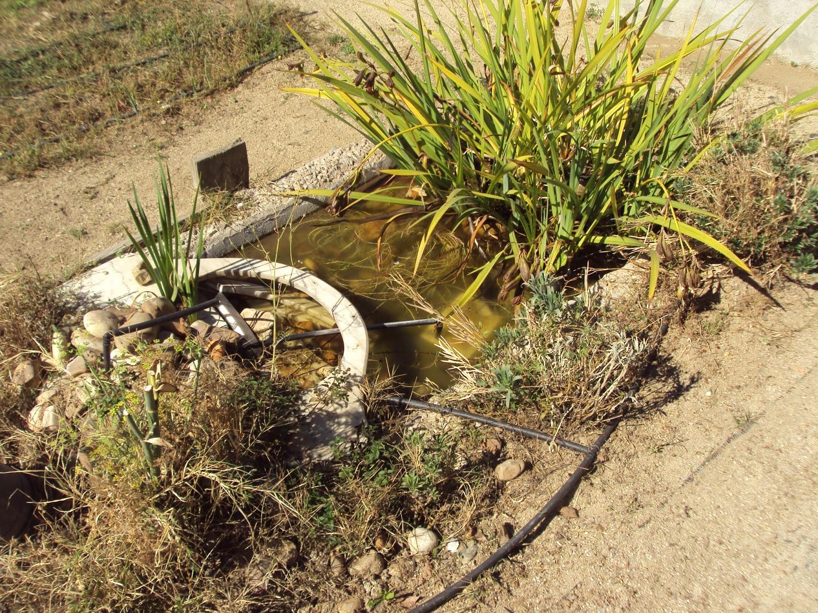 En torno al huerto octubre 2012 for Estudiar jardineria